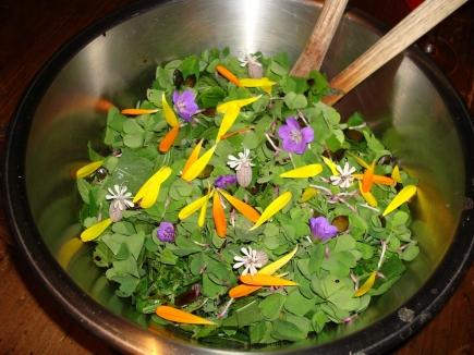 une salade avec des plantes sauvages